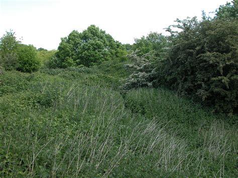 grass bush image after photos thick bush bushes plants grass green tree