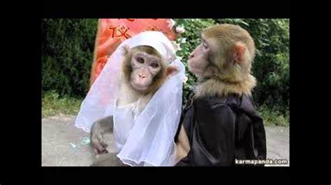 Los monos más graciosos del mundo (tinkiwinki) YouTube