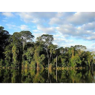 5-five-5: Atlantic Forest (Brazil)