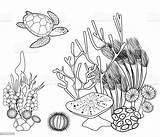 Coral Reef Coloring Turtle Aquarium Animals Sea Marine Tropical Algae Animal Istock Belarus Wildlife Wild sketch template