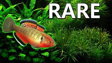 Rare Animals India