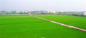 Chiayi–Tainan Plain - Wikipedia  Plain