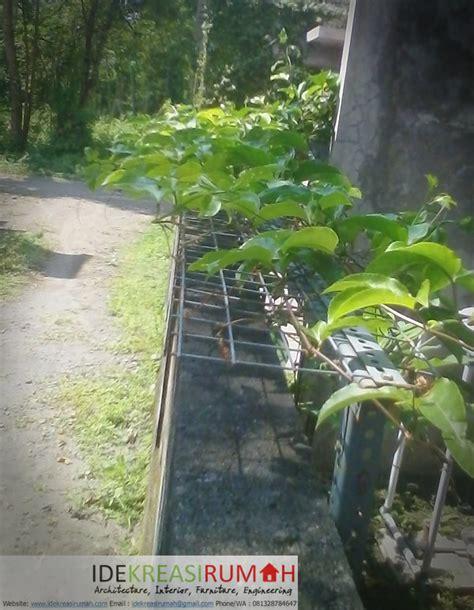 kreasi tanaman rambat  pagar batako ide kreasi rumah