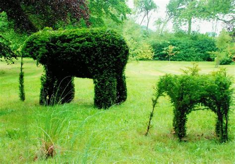 Best Images About Standards And Topiary On Pinterest