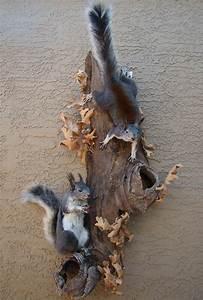 Grand Canyon Wildlife Taxidermy, Arizona Taxidermy