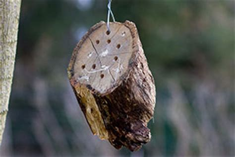 insektenhotel aus einer baumscheibe selber bauen anleitung diybook de