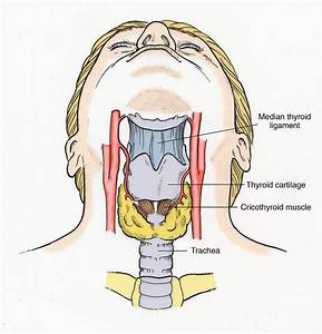 Illustration Of Throat Anatomy 4 Photograph By Science Source