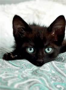 Eyes, Kittens and Black kittens on Pinterest