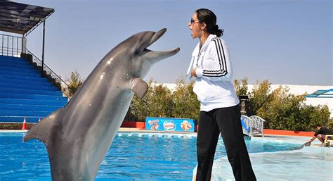 Egypt's First Female Dolphin Trainer Swims Against The Stream