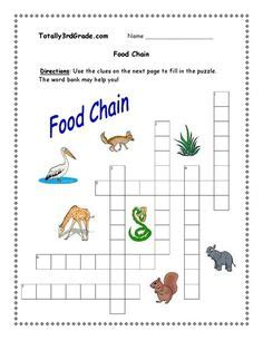 food chains food webs images science