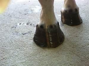 Hoof Flares In Horses