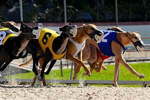 Dog Racing Could Be Coming To An End In This State - Three ...
