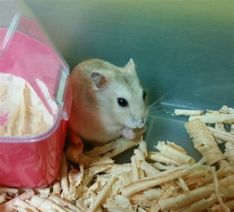 While a hamster is a common pet, there are many surprising facts about them that many people don't know. The Truth About Hamsters: Sorting Through the Myths | Petslady.com