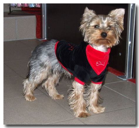 Jogger Hundepullover DogsZone **CHEF KOMMT **Pulli für