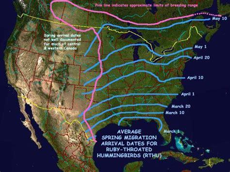 hummingbird migration patterns 171 free patterns