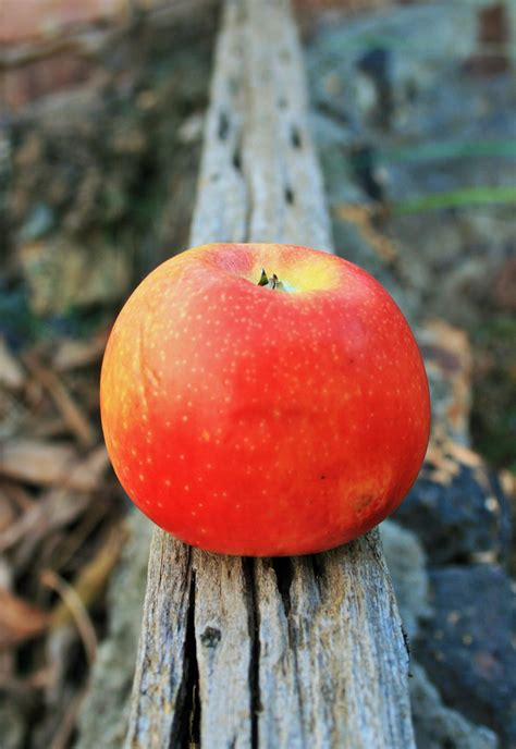 Apple On A Plank Free Stock Photo - Public Domain Pictures