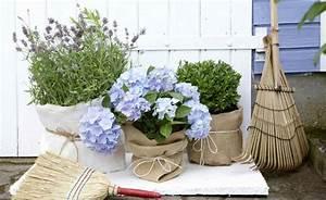 Lavendel Im Topf überwintern : ber ideen zu hortensien garten auf pinterest hortensien hydrangea quercifolia und ~ Frokenaadalensverden.com Haus und Dekorationen