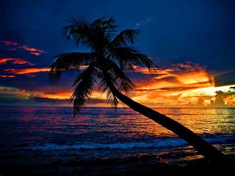 tropical sunset wallpaper desktop wallpapersafari