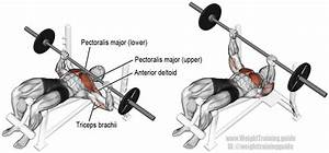 Decline barbell bench press guide and video | Weight ...