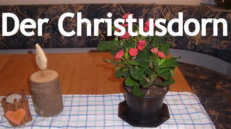 adventslicht  der christusdorn youtube