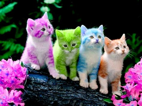 Kitten Backgrounds by Kitten Wallpapers 183 Wallpapertag