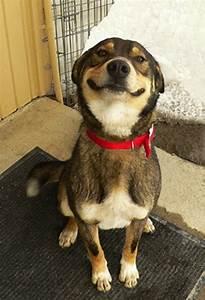 11 Super Happy Dogs