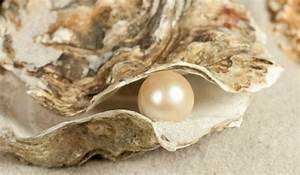 How Do Oysters Make Pearls?