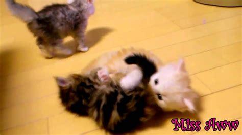 cute kittens playing   cute youtube
