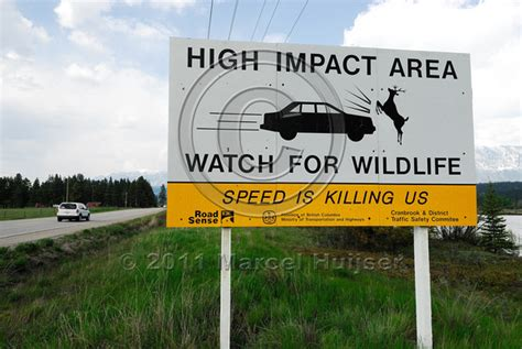 Marcel Huijser Photography  Wildlife Warning Signs. Contemporary Signs Of Stroke. Consultation Room Signs Of Stroke. Food Cartoon Signs Of Stroke. Plan Signs. Paediatrics Signs. Tourist Signs Of Stroke. Replacement Signs Of Stroke. Garage Signs