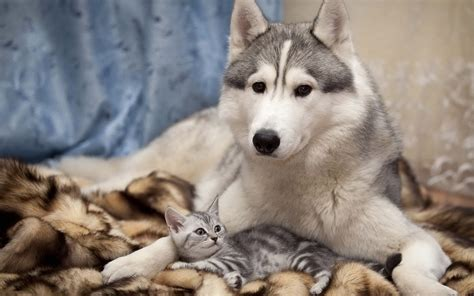 wallpapers hd cat  dog images dogs cats wallpaper jpg