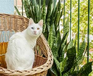 Welche Pflanzen Sind Nicht Giftig Für Katzen : bogenhanf ist er giftig f r katzen ~ Eleganceandgraceweddings.com Haus und Dekorationen