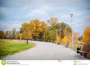 Autumn Scenery Of Park Alley With Bushes And Trees On ...