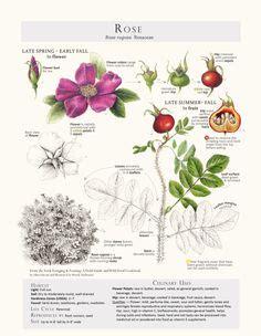 Pin Dede Turner Flower Inspiration Anatomy