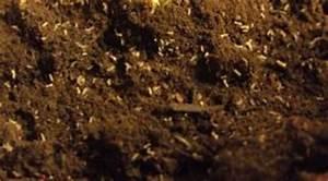 Kleine Mücken In Der Blumenerde : sch dlinge im kr utergarten bek mpfen ~ Lizthompson.info Haus und Dekorationen