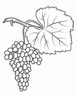Grapes Coloring Pages Fiano Grape Crafts Printable Drawing sketch template