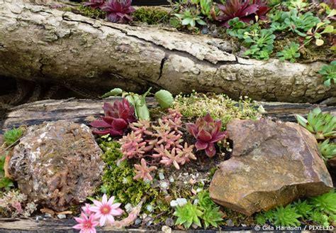 Steingarten Anlegen  Neue Ideen Für Ihren Garten Garten
