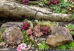 Steingarten Bilder Beispiele : steingarten anlegen neue ideen f r ihren garten garten hausxxl garten hausxxl ~ Watch28wear.com Haus und Dekorationen