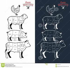 Britisches Fleisch Schneidet Diagramme Vektor Abbildung