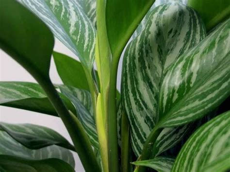 how to identify green house plants hunker