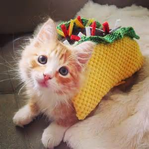 taco cat adorable pets in taco suits from petco