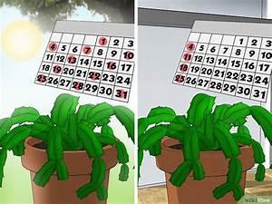 Comment Entretenir Un Cactus : comment entretenir un cactus de no l 14 tapes ~ Nature-et-papiers.com Idées de Décoration