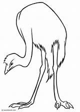Emu Colorare Malvorlage Vogel sketch template
