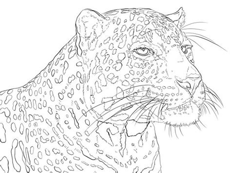 portrait  indian leopard coloring pages colouring adult