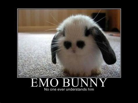 Bunny Meme - 17 best images about gifs on pinterest so tired everything and rain storm