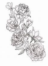 Peony Tattoo Coloring Drawing Peonies Tattoos Drawings Magnolia Flowers Magnolias Pencil Tatouage Tatoo Geometric Zeichnung Ink Pfingstrosen Template Tatouages Sketch sketch template