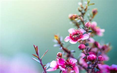 Hd Wallpaper Flower Download