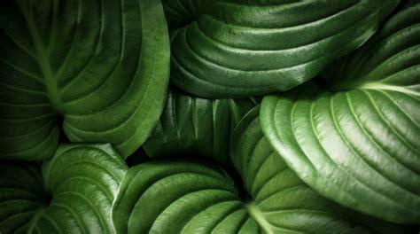 piante particolari da giardino 9 piante da ombra per il giardino fito