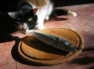 cat and fish cat sayings 6 purrfect quotes in ninchanese
