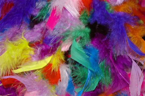 bird with colorful feathers free images decoration pattern carnival color
