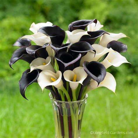 calla sun or shade add beauty and extend the garden season with spring planted garden bulbs